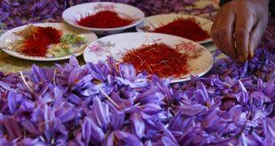 قیمت فروش زعفران فردوس