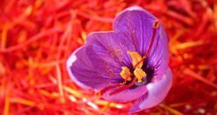 قیمت زعفران حمید در بازار کشور