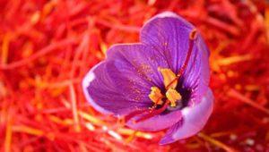 زعفران پوشال معمولی