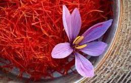 فروش عمده زعفران تربت حیدریه